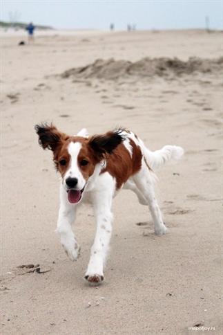 5x hondenstranden in Nederland [altijd loslopen]