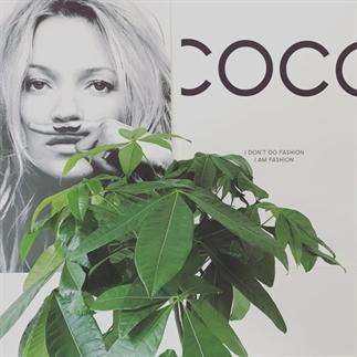 Review: Desenio posters en prints