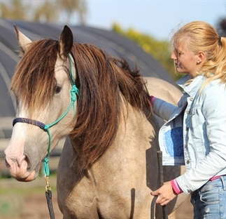 Natuurlijk Paarden Traine