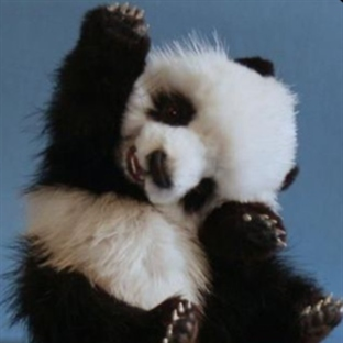 sitting_panda