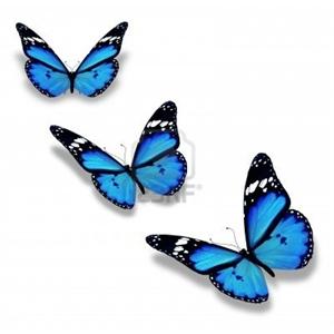 mavi kelebek uçup gider!